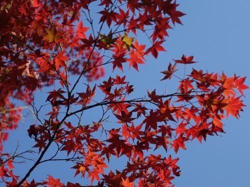 2016年秋、紅葉の京都の旅。<br /><br />赤山禅院を下りて銀閣寺へ。まだ紅葉には少し早かった。<br />途中、吉田山の茂庵で一休み、真如堂まで足を伸ばしました。お陰で快晴の青空に映える紅葉を愛でることができました。<br /><br /><br />表紙写真は、真如堂の紅葉。