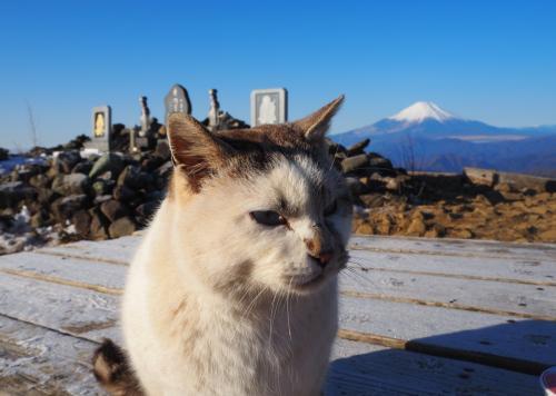丹沢塔ノ岳 初登山はねこちゃんに歓迎されて♪