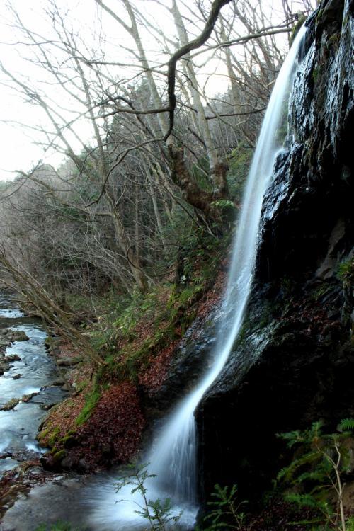 ◆寒中の勢至堂五滝と白鳥