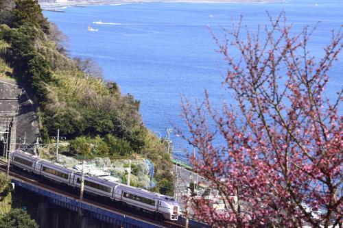 早咲き桜としても知られている「おかめ桜」が咲き広がる風景を探しに、早春の根府川の地を散策してみました。