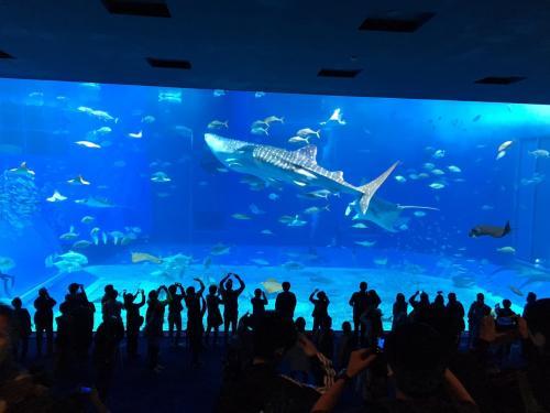 沖縄へ行くなら必ず?と言うほど行き先の話題になるかとは思われます。<br />美ら海水族館!!<br />とっても大きな水槽にジンベイザメがいることと目の前は海が広がり最高なロケーション!<br />カラフルなお魚や大人気のイルカショーなどかなり充実していて長くいても飽きないほどです。<br />たくさんの種類があり、見たことない魚もたくさんでした。<br />沖縄特有のお魚もたくさん見られました。<br />大人も童心に戻って楽しめます。<br />