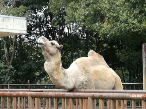 松山での妻の試験に同行。ついでに温泉&動物園