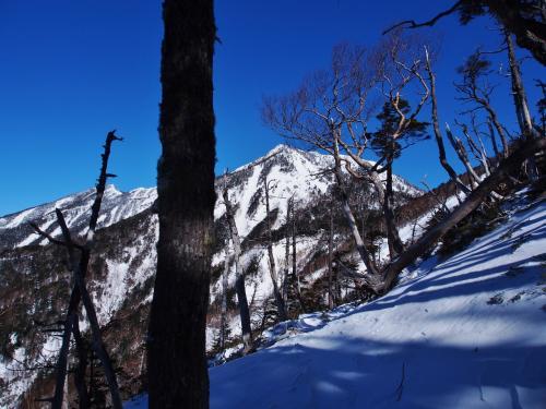 ずっと登りたかった積雪期の女峰山黒岩尾根。<br />本当は2月に歩きたかったけど諸般の事情で3月に。<br />やはり遥拝石から先はしんどかったです。<br /><br />本格的な雪山は甲斐駒と今回の女峰山だけしか経験がありませんが、黒戸の方が変化に富んでいて歩いていて楽しいです。<br />山頂直下のコース取り、テクニカル面ではこっちの方が難しいような気がしました。<br />黒戸は絶対ミスってならない斜度60度のルンゼがありますが、女峰は滑落しても木があるから止まります。<br /><br /><br />山行11時間54分<br />休憩02時間00分<br />合計13時間54分<br />合計距離: 22.92km <br />累積標高(上り): 1961m <br />累積標高(下り): 1922m