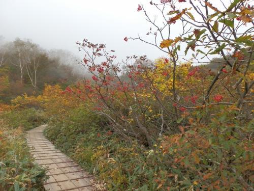 アルプスを一望する高山植物園