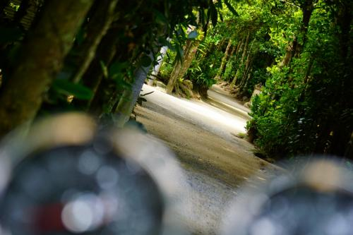 2017年3月,レンタルバイクを借りて沖縄本島を走ってきました! 南の風を感じながら,沖縄の魅力を存分に楽しむことができました。<br /><br />【3日目】バイクで本島北部を走ります。万座毛→備瀬(びせ)のフクギ並木→今帰仁(なきじん)城跡→古宇利島の順にめぐっています。<br /><br />【4日目】楽しかった思い出を胸に帰路につきます。