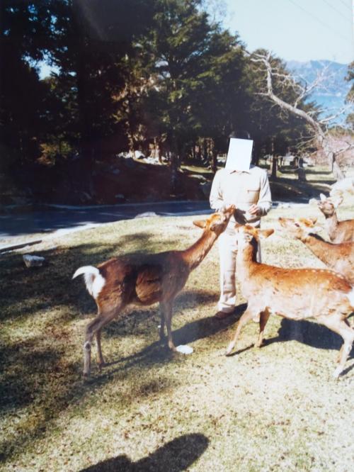 1984年(昭和59年)5月 宮城(松島(瑞巌寺 雄島) 女川 牡鹿半島(金華山 千畳敷 鹿山公園) 奥松島 仙台の旅)