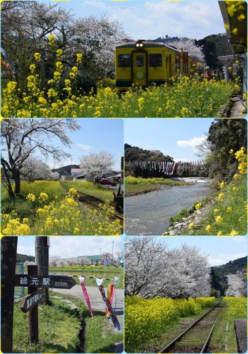 桜と菜の花 いすみ鉄道・小湊鐵道沿線ドライブ 2017