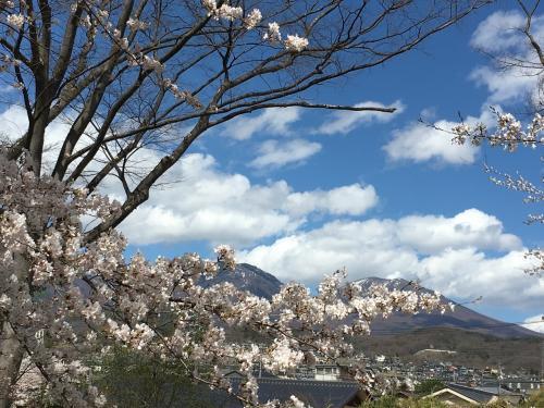 駅からハイキングを利用して懐古園に行ってきました。桜情報を確認しつつのこの日、風が凄かったけれど又それはそれで、満開の桜に桜吹雪が舞って綺麗な上に、ハイキングコースで出会った小諸の人達があたたくとても良い1日を過ごせました。