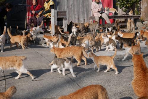 瀬戸内海に浮かぶ青島<br />ここは、猫の島とも呼ばれています。<br /><br />島民15人くらいに対して<br />猫は100匹以上暮らしています。