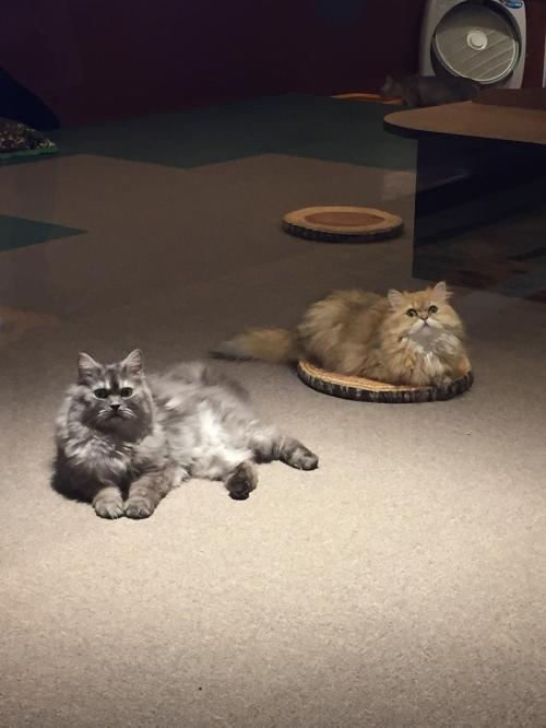 函館~洞爺湖~登別~札幌の旅。<br />初めて訪れた洞爺湖で猫ちゃんたちに幸せをいっぱいもらいました。