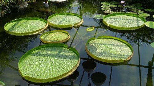 大阪花博公園 咲くやこの花館の見学 その1。