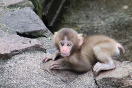 2017年お盆の三日連休中日は長野遠征(3)午後から訪れた茶臼山動物園:Hello!キリンとニホンザルの赤ちゃん&がんばれ日本の淡水カメ