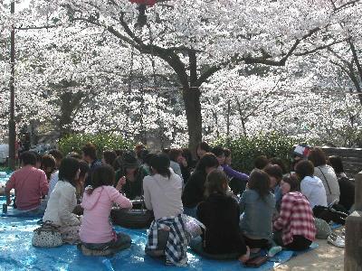 桜の名所、夙川(しゅくがわ)でお花見をした。とにかく、凄い人で、花見に行ったのか、人見に行ったの