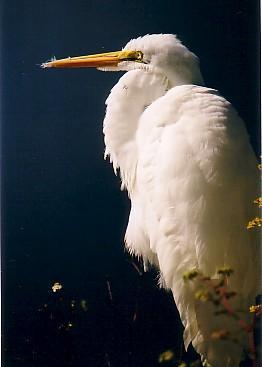 エバーグレーズ国立公園の画像 p1_14