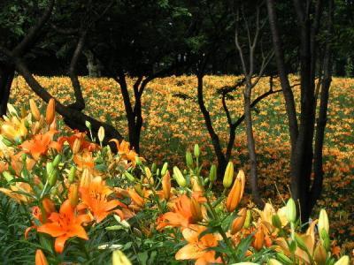 ユネスコ村・ゆり園