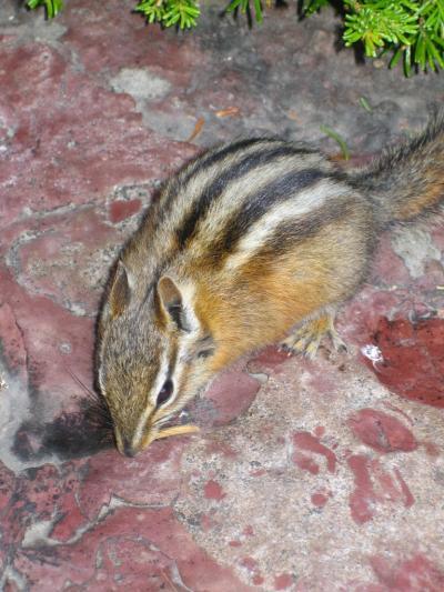 グレイシャー国立公園の画像 p1_19