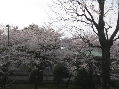 東京の中にある外国