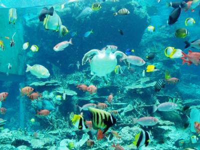 沖縄本島2007