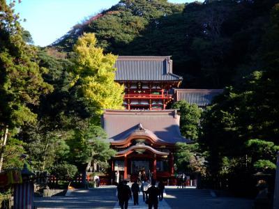 鎌倉~紅葉2008~