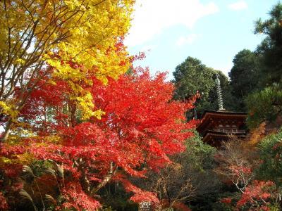 「そうだ、岐阜から、京都、行こう。」2008・晩秋・クルマで行く、紅葉狩り編