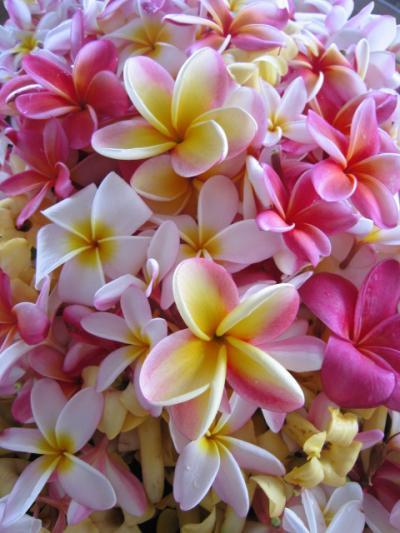 ハワイ島 コナコーヒーフェスティバル「カッピングコンテスト」(コナ)(2008.9~11)