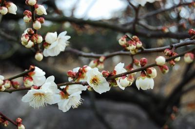 ふらりと、名古屋へ (1) ~徳川園にて尾張徳川家の栄華に触れる