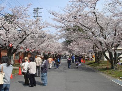 2009年4月 ~ お花見 宇治駐屯地春の一般開放 ~