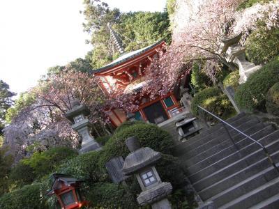 20年ぶりの京都