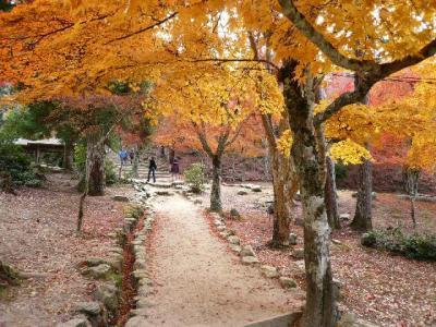 秋の安芸の宮島・紅葉の旅 FINAL