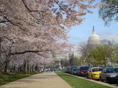 ワシントンDCの旅 2004年 ポトマック河畔の満開の桜と美術館、博物館めぐり