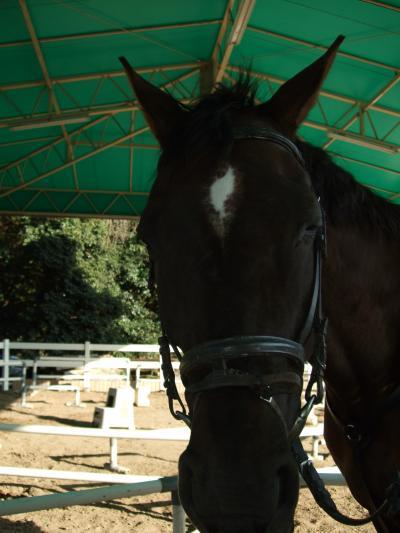 o●乗馬体験●o 大阪・服部緑地公園