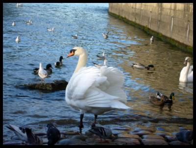 セーヌの鳥たち(PARIS)