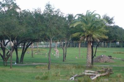 フロリダのウォルト・ディズニー・ワールド・リゾート