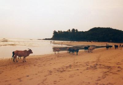 ムンバイからゴアへ 【大都会と楽園】