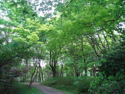 「森林公園 愛知」の画像検索結果
