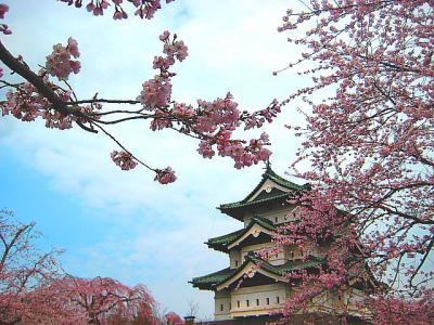 1泊2日往復1,500Km!! GWのバスツアー,花だ!桜だ!弘前公園・角館 東北二大桜紀行