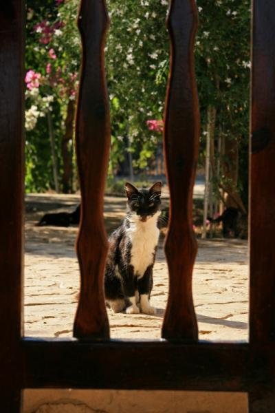地中海猫探しの旅◎リマソール2日目 憧れの猫修道院◎