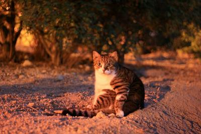 地中海猫探しの旅◎Malta1日目 Sliema夜の公園猫探し◎