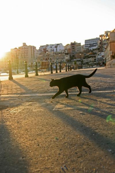 地中海猫探しの旅◎Malta2日目つづき 猫大漁◎