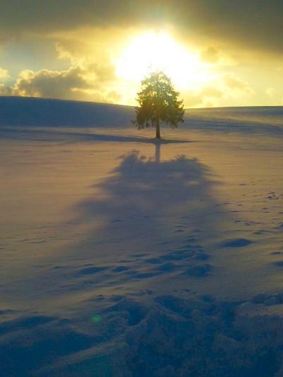 2011/2 美瑛の雪景色 その1 …丘の樹々が輝く時間