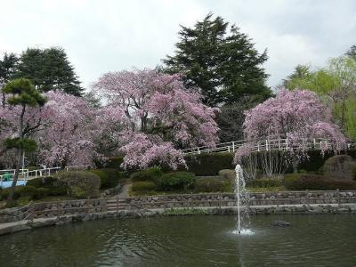 馬事公苑で桜探し