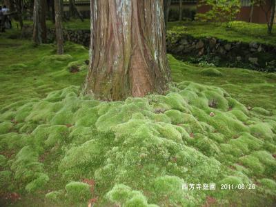 洛西の苔の庭と西行が歩いた道/京都市西京区・松尾谷~大原野