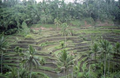 初めてのインドネシア バリ島、ジャワ島編
