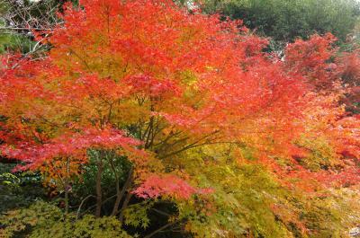 紅葉の京都③洛西