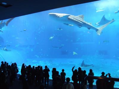 沖縄美ら海水族館へ、そして再びひめゆりの塔へ!
