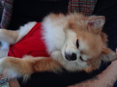 ◆犬旅◆ 静岡/伊豆高原【理想郷 迎賓館】~祝5歳の誕生日~週末2日間(2011.12)