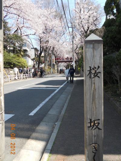 12年越しの桜坂へ! -他にも色々な街の満開の桜を巡ってきました♪