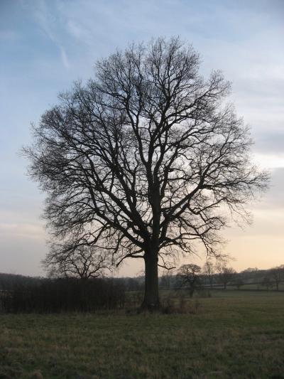 2012年春 英国(の田舎)#1 コッツウォルズのある村 その1