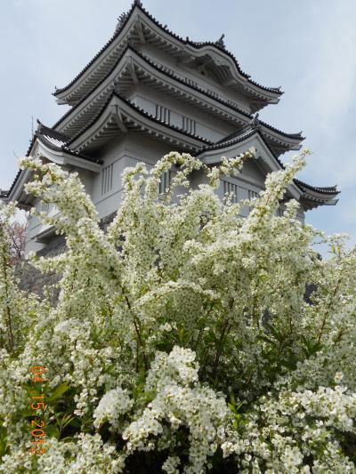 童心に返って、地元を楽しむ! & 関東で今年最後のお花見 ☆行田市内観光☆