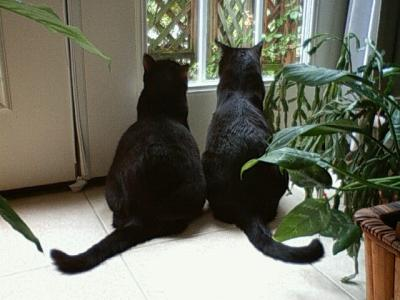 ワシントン古楽祭 番外編③ Cats in my friends' house